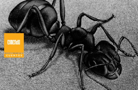 Soñando con hormigas con alas de ángel